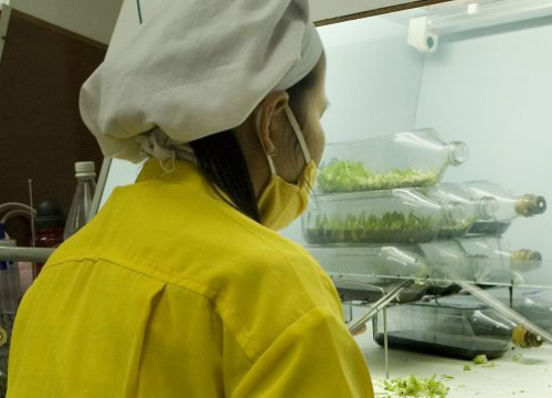 A woman working in a laboratory in a orchid farm