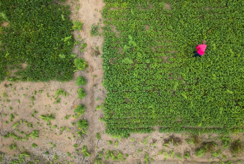 Aerial view of a woman in her field