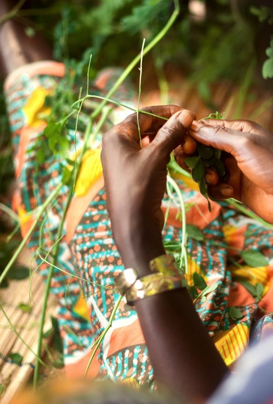 Guinea, A woman  Rural Women's Cooperative.